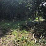 Wandelen door het Bunkerbos