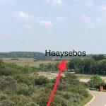 Haayse bos vanaf de zeekant gezien